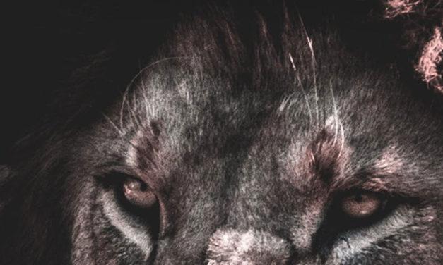 MyLions | S6 – Best Of
