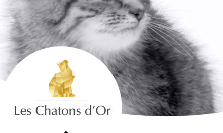 Les Chatons d'Or 2014